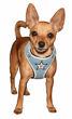 Picture of Super Star Mesh Harness Vest - Blue.