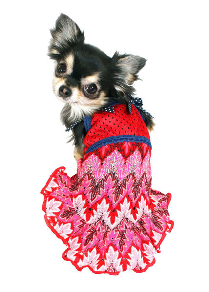 Picture of Muttsoni Lace Dress.